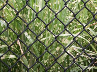 Tips for Preventing Grass and Weeds Under Your Chain Link Fence