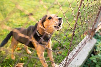chain link fence san jose